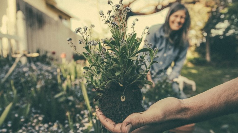 Θα... σώσει τον κόσμο η κηπουρική; Ένα ιδιαίτερο project