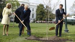 Δεν άντεξε η βελανιδιά που φύτεψαν Τραμπ και Μακρόν στον Λευκό Οίκο