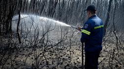 Συνελήφθη 23χρονος για τη φωτιά στην Αχαΐα