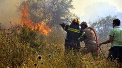 Σε εξέλιξη δασικες πυρκαγιές σε Αγίους Θεοδώρους και Εύβοια