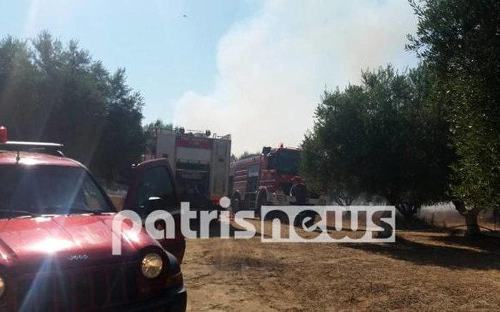 Φωτιά σε αγροτοδασική έκταση στην Ηλεία