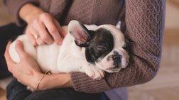 Τα σκυλιά αποτρέπουν πιεσμένους φοιτητές να αφήσουν τις σπουδές τους