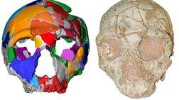 Βρέθηκε κρανίο 210.000 ετών από την Ελλάδα