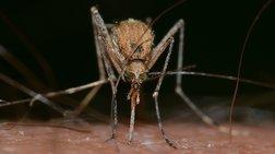 Δέκα τα κρούσματα λοίμωξης από τον ιό του Δυτικού Νείλου