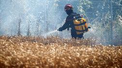 Χιλιάδες στρέμματα καμένα στη Γαλλία λόγω καύσωνα και ξηρασίας