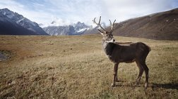 arktiki-200-tarandoi-brethikan-nekroi-apo-tin-peina-logw-klimatikis-allagis