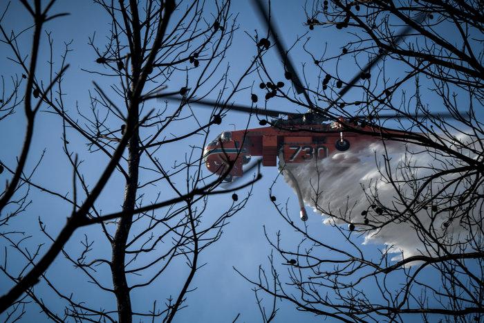 Σε εξέλιξη οι πυρκαγιές σε Ηλεία και Φθιώτιδα - Συνεχής ενημέρωση - εικόνα 3