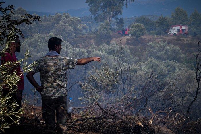 Σε εξέλιξη οι πυρκαγιές σε Ηλεία και Φθιώτιδα - Συνεχής ενημέρωση - εικόνα 2