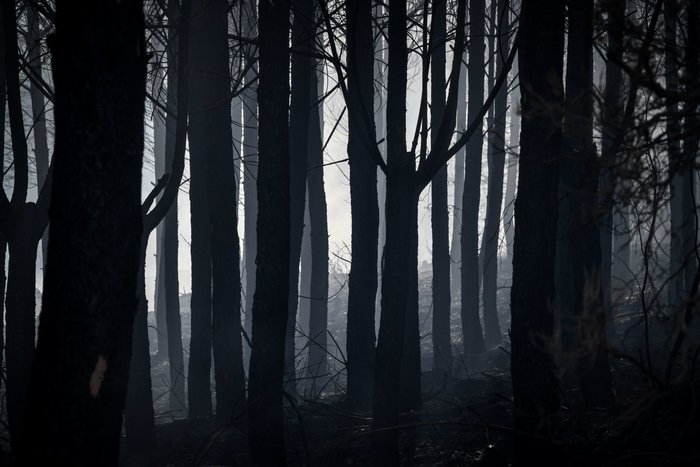 Σε εξέλιξη οι πυρκαγιές σε Ηλεία και Φθιώτιδα - Συνεχής ενημέρωση