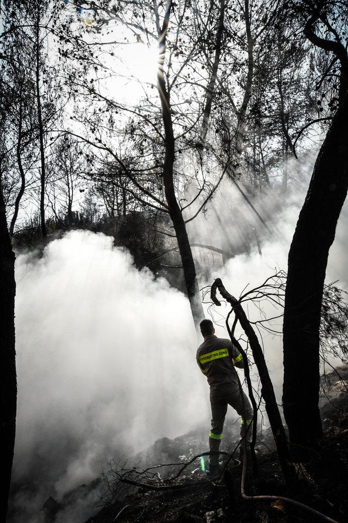 Απαγόρευση κυκλοφορίας σε δάση & συνεχείς περιπολίες: 44 πυρκαγιές σήμερα - εικόνα 3