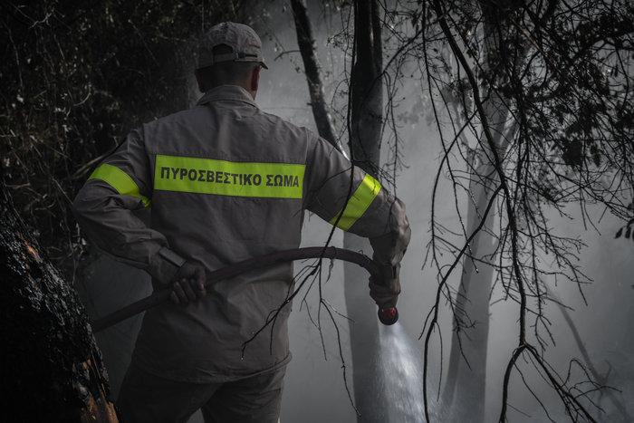 Απαγόρευση κυκλοφορίας σε δάση & συνεχείς περιπολίες: 44 πυρκαγιές σήμερα - εικόνα 4