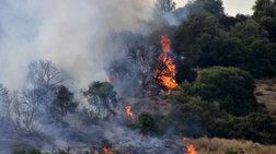 Σε εξέλιξη μεγάλη φωτιά στην Τιθορέα Φθιώτιδας