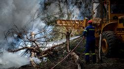 Φωτιά στην περιοχή Ανεμοχώρι στην Ηλεία - Στάχτη 20 στρέμματα
