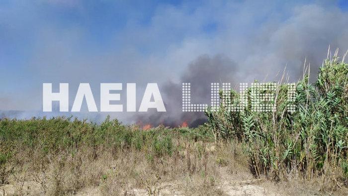 Φωτιά στην περιοχή Ανεμοχώρι στην Ηλεία - Στάχτη 20 στρέμματα - εικόνα 2