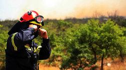 Φωτιά σε δάσος στην Κάτω Δροσιά Ερύμανθου