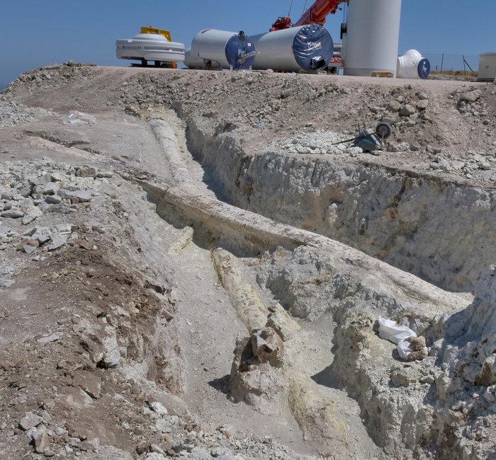Μυτιλήνη: Γιγάντιοι κορμοί απολιθωμένων κωνοφόρων αποκαλύφθηκαν σε ανασκαφή - εικόνα 2