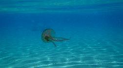 Δείτε με ένα κλικ ποιες ελληνικές παραλίες έχουν τσούχτρες