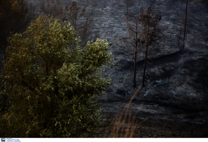 Τεράστια οικολογική καταστροφή, μάχη με τις αναζωπυρώσεις στην Εύβοια - εικόνα 6