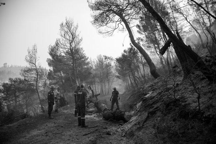 Τεράστια οικολογική καταστροφή, μάχη με τις αναζωπυρώσεις στην Εύβοια - εικόνα 2