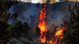 Σε ύφεση η φωτιά στα Καλάβρυτα