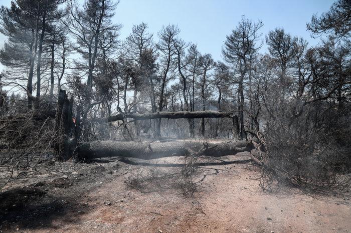 Εύβοια: Χωρίς ενεργό μέτωπο η φωτιά- Oι ενδείξεις εμπρησμού - εικόνα 2