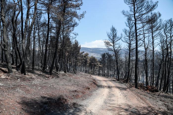 Εύβοια: Χωρίς ενεργό μέτωπο η φωτιά- Oι ενδείξεις εμπρησμού - εικόνα 3