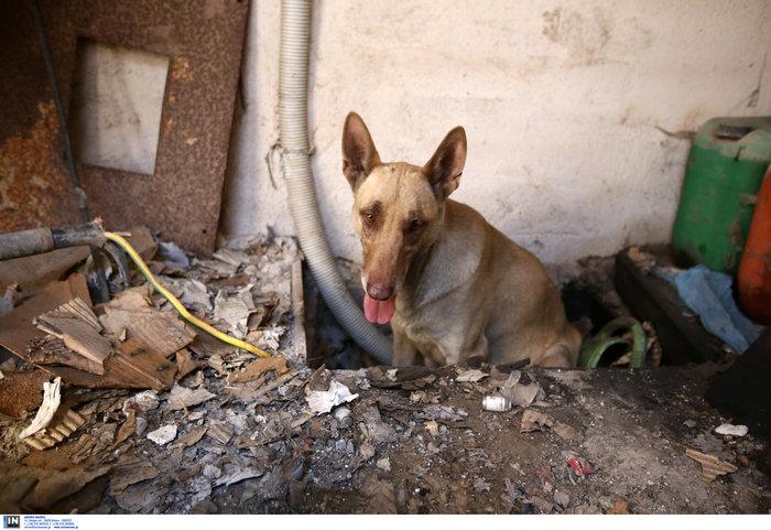 Η σκυλίτσα που έσωσε τα μικρά της από την φωτιά του Υμηττού