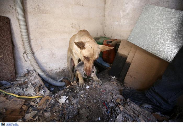 Η σκυλίτσα που έσωσε τα μικρά της από την φωτιά του Υμηττού - εικόνα 2