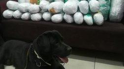 Θεσσαλονίκη:  Ο Άτλας βρήκε βρήκε 22 κιλά κάνναβης κρυμμένα σε κοντέινερ