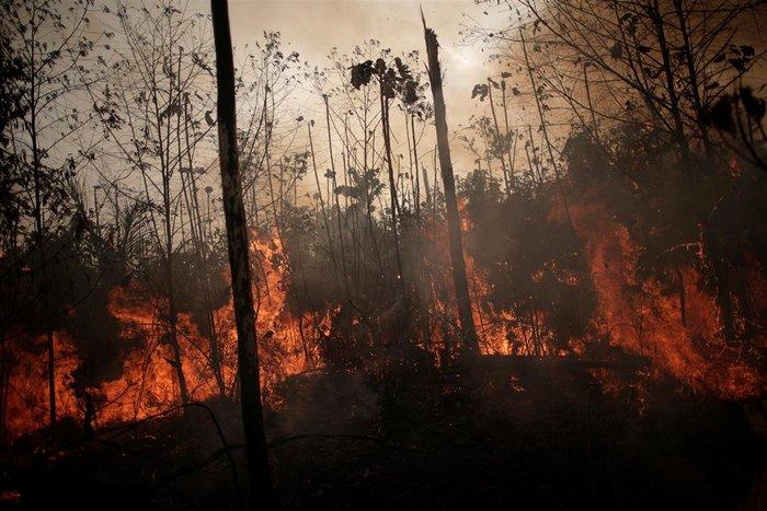 Παγκόσμια οργή κατά Μπολσονάρου για τις φωτιές στον Αμαζόνιο - εικόνα 3