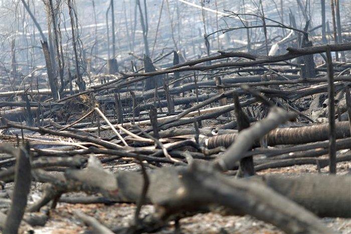 Παγκόσμια οργή κατά Μπολσονάρου για τις φωτιές στον Αμαζόνιο - εικόνα 2