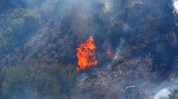 Πυρκαγιά σε δύσβατη περιοχή στα Καλάβρυτα