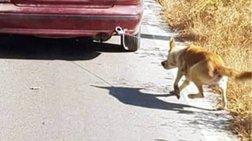 Ρέθυμνο: Συνελήφθη ο 73χρονος που έσερνε σκύλο με το αυτοκίνητό του