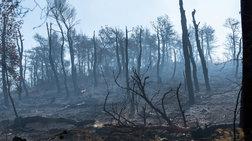 Εύβοια: Το μαύρο αποτύπωμα μιας τεράστιας καταστροφής