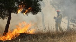 Σε εξέλιξη πυρκαγιά σε δάσος στην Αρχαία Ολυμπία
