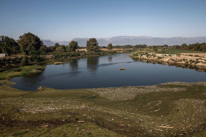 Εκατοντάδες νεκρά ψάρια στον Πηνειό ποταμό [Εικόνες]