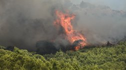 Ζάκυνθος: Ανεξέλεγκτη η φωτιά - Εκκενώθηκαν χωριά, κάηκε σπίτι