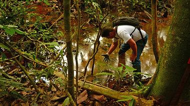 tainiothiki-apo-tis-futeies-tis-kolombias-stin-ekouadoriani-amazonia