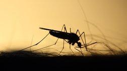 Κούβα: Οι ψεκασμοί για τα κουνούπια ευθύνονται για μυστηριώδη νόσο