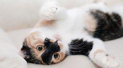 Νέα έρευνα: Οι γάτες δημιουργούν δεσμούς με τους ανθρώπους