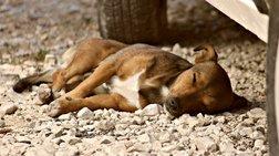 Τρεις συλλήψεις και πρόστιμα για ζώα συντροφιάς, σε Ρέθυμνο και Λασίθι