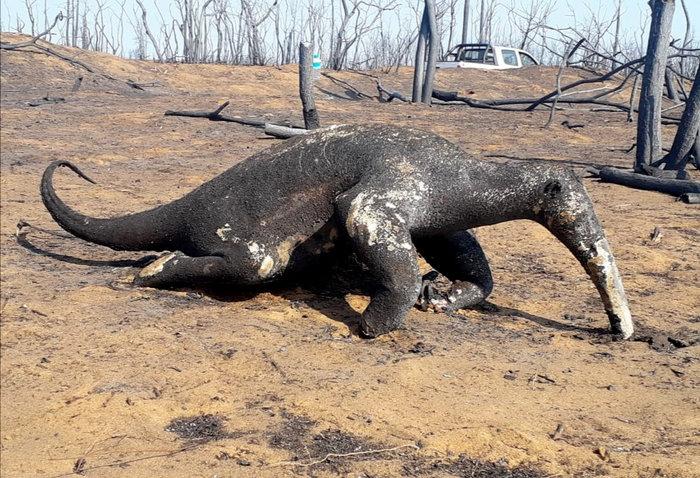 Πάνω από 2,5 εκατ. άγρια ζώα νεκρά από τις φωτιές στη Βολιβία