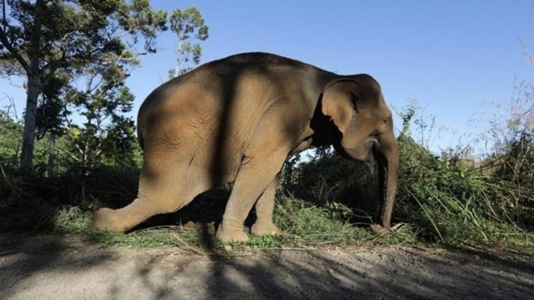 perissoteroi-apo-50-elefantes-thumata-tis-ksirasias-se-diastima-enos-mina