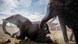 mpotsouana-100-elefantes-thumata-tis-ksirasias