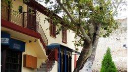 Πλάτανος ηλικίας... 828 ετών στη Θεσσαλονίκη