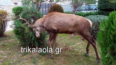 elafi-ekobe-boltes-se-kipous-stous-thrakomakedones---binteo