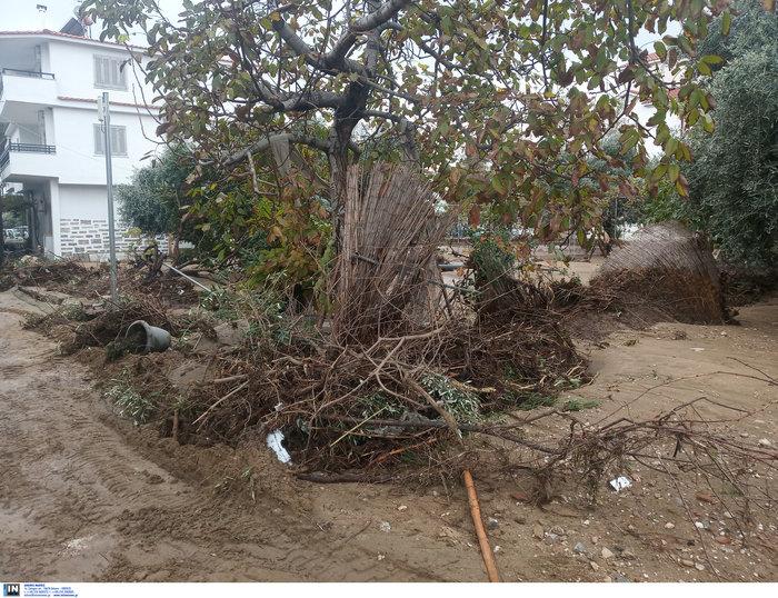 Απίστευτη καταστροφή στη Θάσο - Σε κατάσταση έκτακτης ανάγκης - εικόνα 3