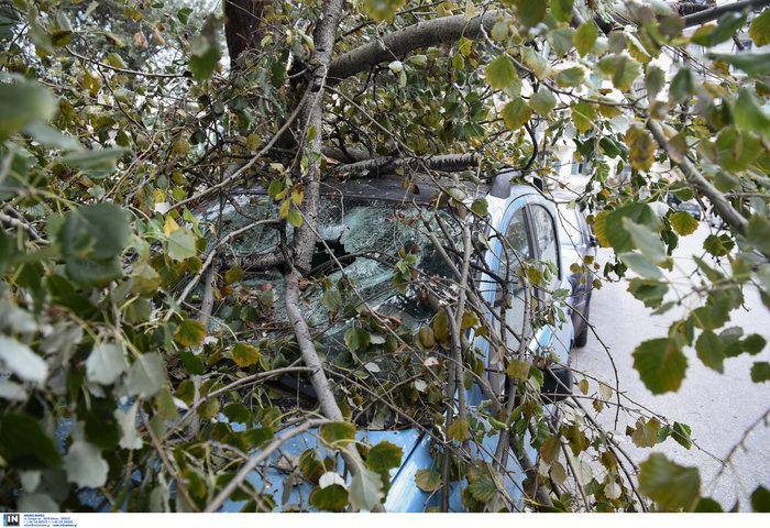 Επεσαν δέντρα και καταπλάκωσαν αυτοκίνητα στη Θεσσαλονίκη  [Εικόνες] - εικόνα 5