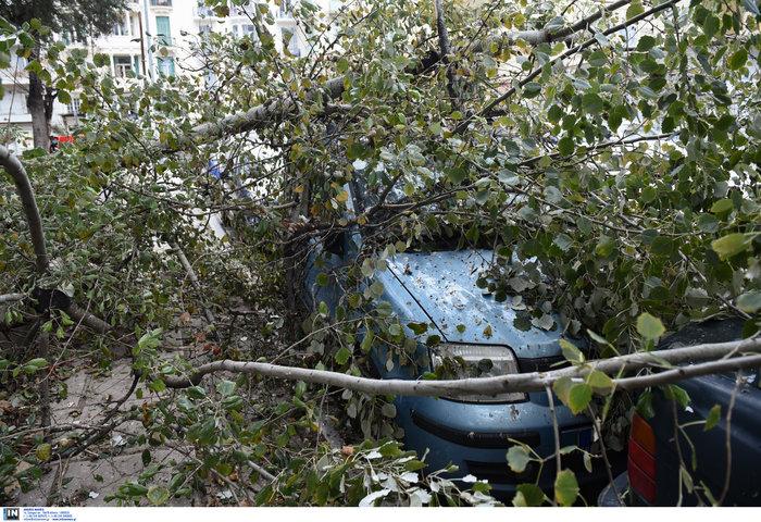 Επεσαν δέντρα και καταπλάκωσαν αυτοκίνητα στη Θεσσαλονίκη  [Εικόνες] - εικόνα 4