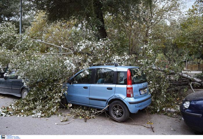 Επεσαν δέντρα και καταπλάκωσαν αυτοκίνητα στη Θεσσαλονίκη  [Εικόνες] - εικόνα 3